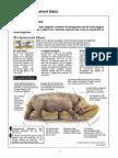 Mostra El rinoceront blanc Avaluació Diagnòstica CAT 4t