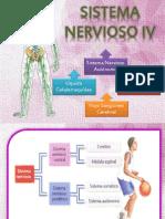 Sistema Nervioso 4