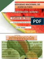 Sandia 1