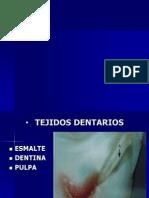 dentina esmalte pulpa