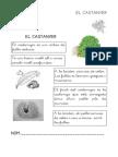 castanyer2