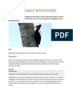 Basic Facts About Woodpeckers