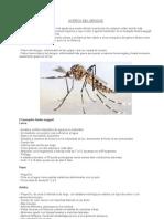 Información sobre dengue