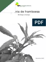 A Planta de Framboesa