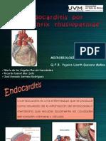 Endocarditis Por Erysipelothrix Rhusiopathiae