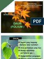 53065369-Botani-Morfologi-Daun