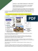 Tema 3 La Arquitectura Romana Caracteres Generales y Tipologia