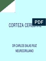 Anatomia - El Cerebro