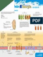 09 Biologia Marcelo Web