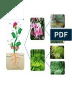 5A.amatia.esquema de Las Plantas Con y Sin Flores