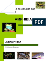 Anfibios x