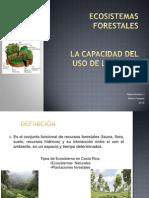 Ecosistemas Forestales