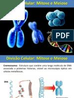 mitoseemeiose-