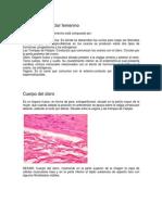 Aparato Reproductor Femenino Histo