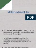 Matriz Extracelular