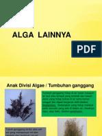 Alga Multiseluler