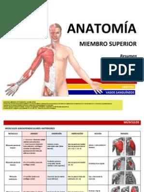 resumen anatomia miembro superior pdf