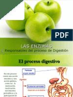 2 Las enzimas digestivo.ppt