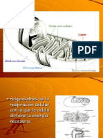 metabolismo  y ATP final.ppt