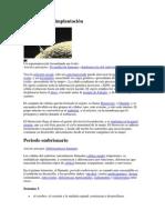 Fertilización e implantación