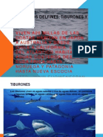 hbitat de los delfines tiburones y tortugas