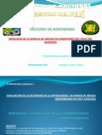 enfermedaddepostcosechaenarvejaantracnosiscolletotrichumspp-100909221109-phpapp02