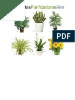 PLANTAS Purificadoras y Repelentes