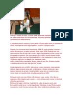 Como educar seu cão