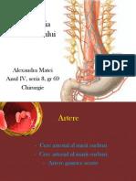 Vascularizatia stomacului