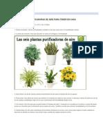 Las 6 Plantas Purificadoras de Aire