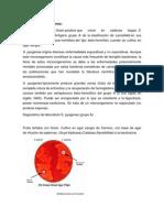 Streptococcus Pyogene2
