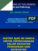 USG Intensif 5. Adnexa Normal & Pathology JJE 20090525