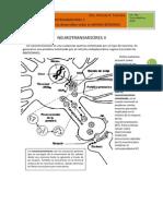 2. Neurotransmisores II