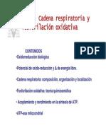 T17-oxidorreduccion
