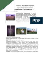 Gramineas 1 DP