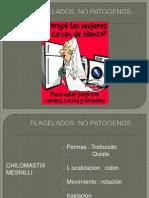 Flagelados No Patogenos