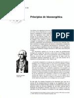 principios de bioenergetica.pdf