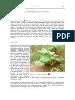 Aspectos generales de la cocona.pdf