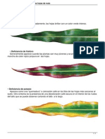 Deficiencia de Nutrientes en Las Hojas de Maiz