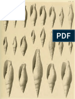 I molluschi dei terreni terziari del Piemonte e della Liguria; L. Bellardi, 1887 - PARTE 5 - Paleontologia Malacologia - Conchiglie Fossili del Pliocene e Pleistocene