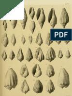 I molluschi dei terreni terziari del Piemonte e della Liguria; L. Bellardi e F. Sacco, 1890 - PARTE 6 - Paleontologia Malacologia - Conchiglie Fossili del Pliocene e Pleistocene