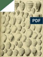 I molluschi dei terreni terziari del Piemonte e della Liguria; F. Sacco, 1890 - PARTE 7 - Paleontologia Malacologia - Conchiglie Fossili del Pliocene e Pleistocene