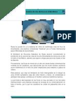 Rusia y la matanza de crías de focas