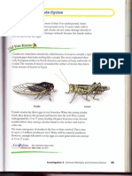 CM2 Prime Time 3.2 Looking at Cicada Cycles