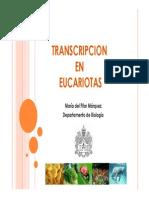 Transcripcion II