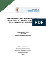 Proyecto de Morfoanatomia Vegetal (La Hoja)