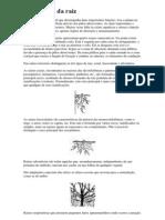 descrição completa simplificada da Morfologia da raiz