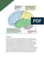 Funciones Neuropsicologia1