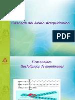 Cascada Del Acido Araquidonico Dra Consuelo Rojas