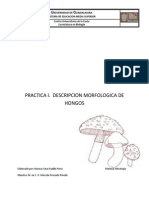 PRACTICA I Micologia Marnay